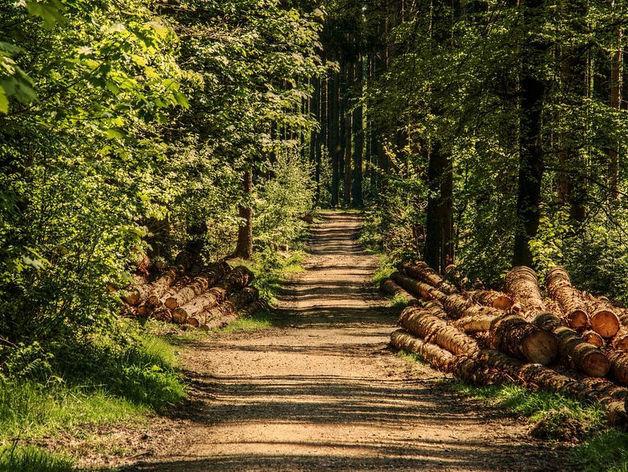 Нижегородским предпринимателям предложат инвестировать в освоение лесов региона
