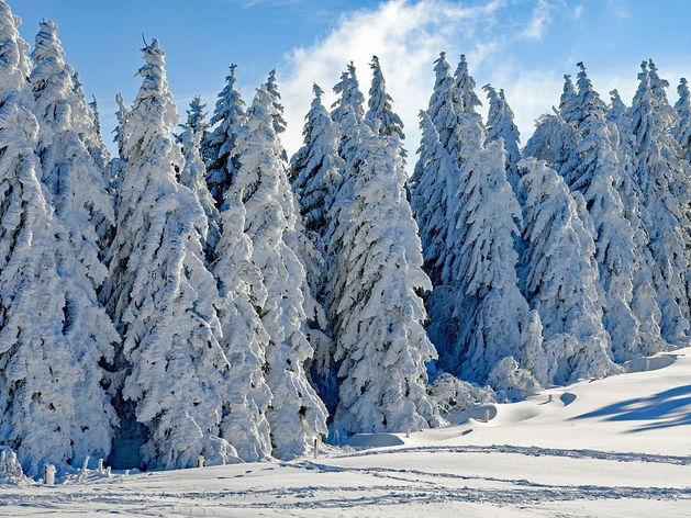 Рост доходов более чем на треть. Нижегородские леса принесли в бюджет почти 900 млн руб.