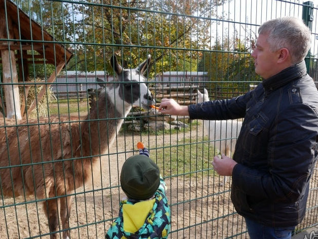 Сорокин — тигр, Тимофеев — барс. Кто и зачем опекает животных в нижегородском зоопарке?