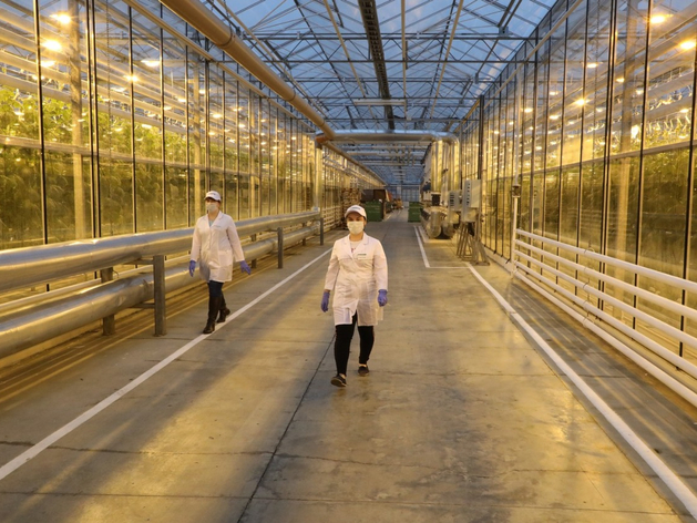 Инвестиции — 300 млн. Агрокомбинат «Горьковский» показал новый способ выращивания овощей
